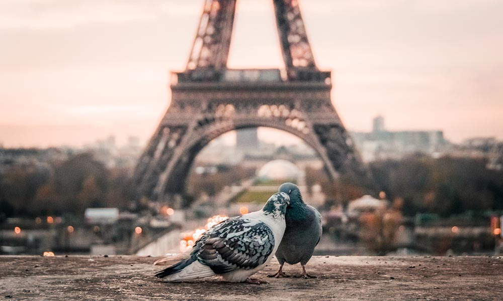 social customs in Paris - how to say goodbye in french culture