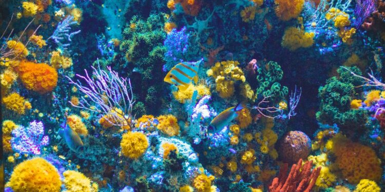 zoos and aquariums live-stream