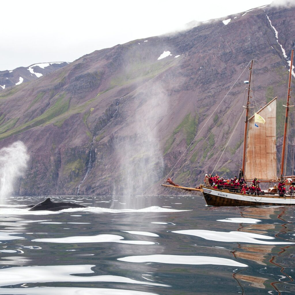 Iceland's whales draw huge visitor numbers, making responsible tourism imperative.