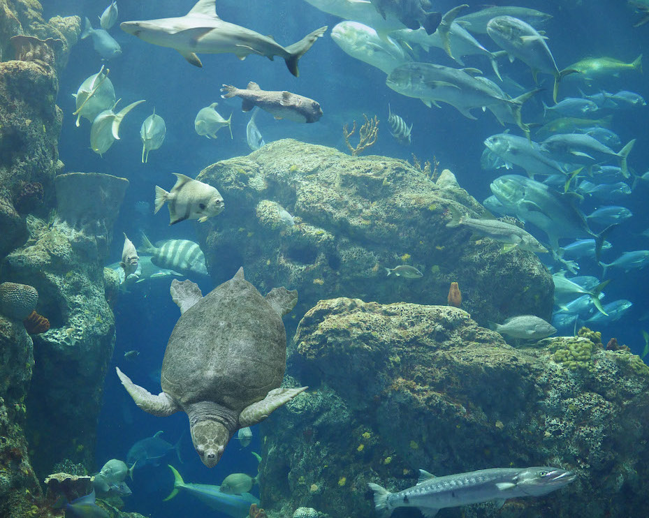 The ocean tank at South Carolina, an ethical wildlife attraction.