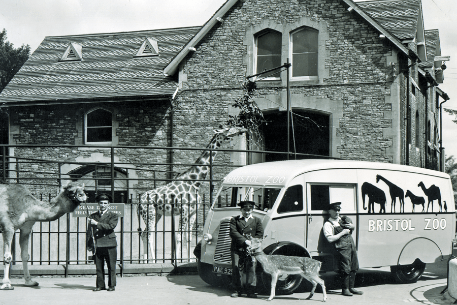 A camel, and deer and giraffe pictured with their handlers outside Bristol Zoo. Date unknown.