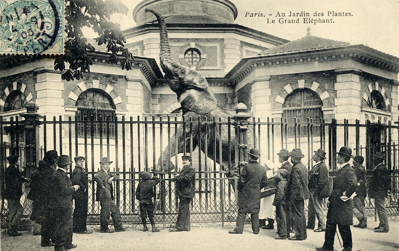 A postcard from Ménagerie du Jardin des Plantes, one of the oldest zoos in the world, picturing an elephant raising up on its hind legs.