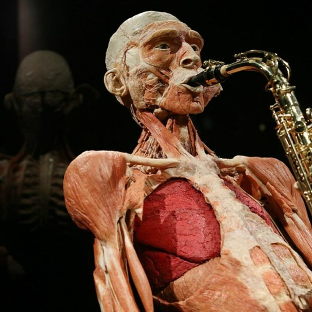 Plastinated body playing the saxophone
