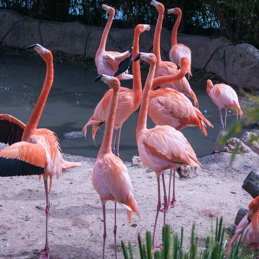 If these flamingos aren't on your Spain bucket list, why not?