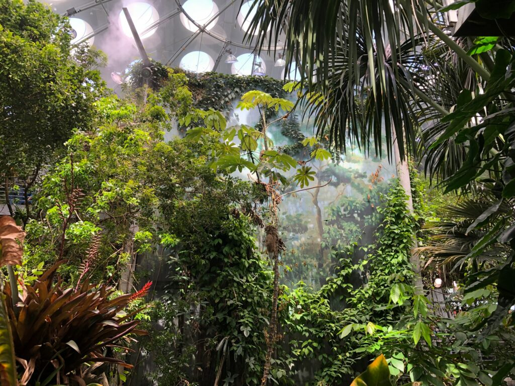 The rainforest at California Academy of Sciences