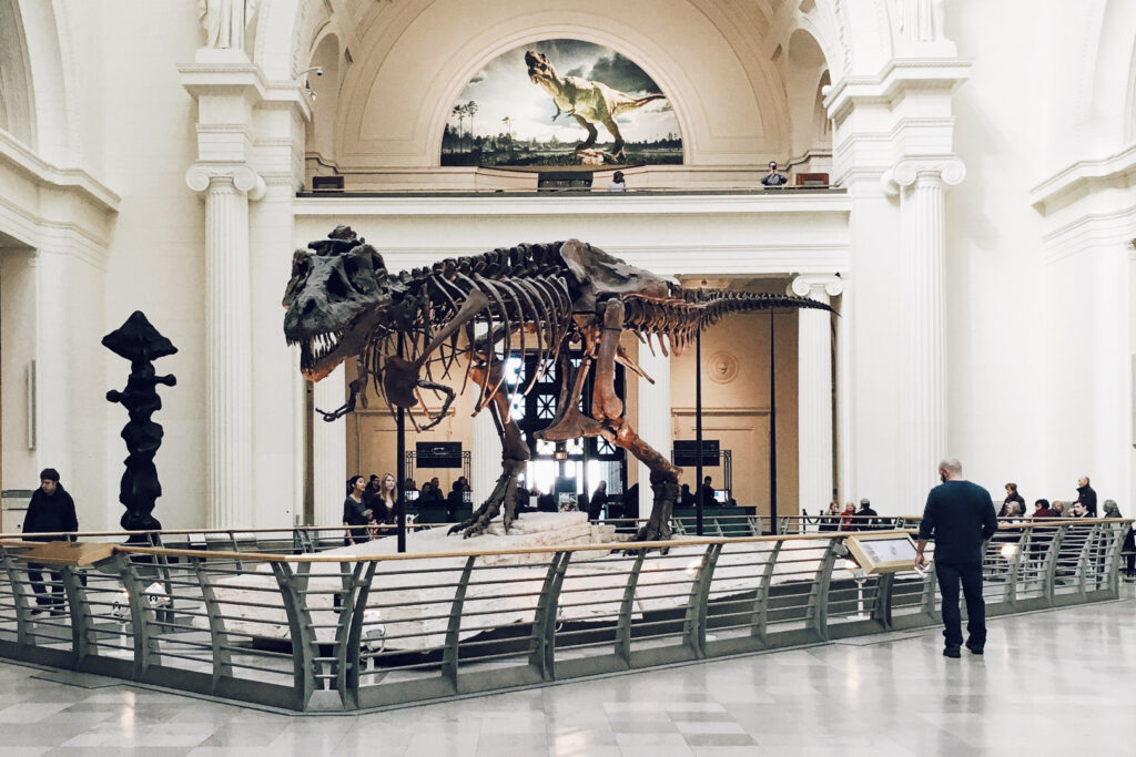 A dinosaur skeleton at Field Museum of Natural History