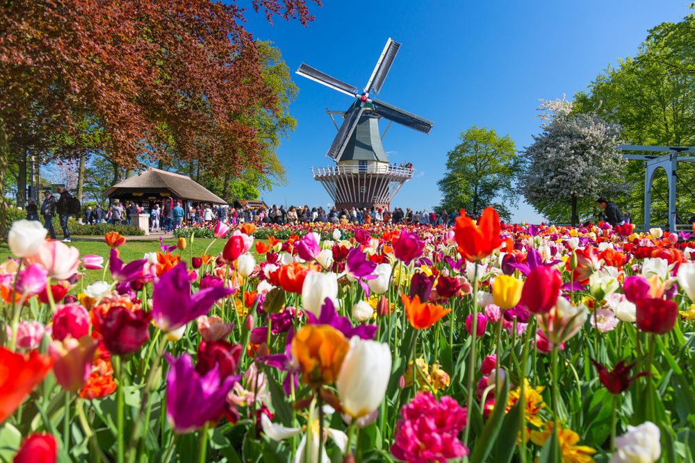 A big group of people the distance at Keukenhof, looking at a big windmill