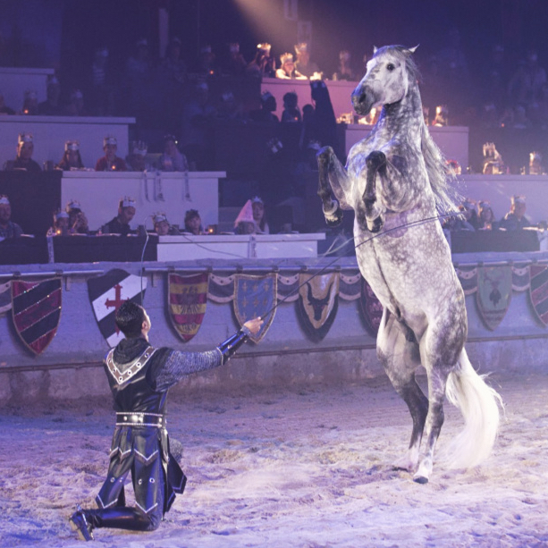 Horse rearing at Medieval times canada, a great Easter weekend activity