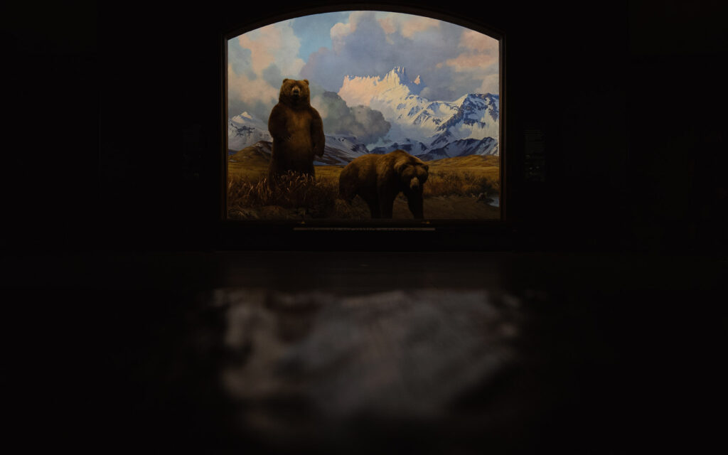 Stuffed Grizzly bears at the American Museum of Natural History