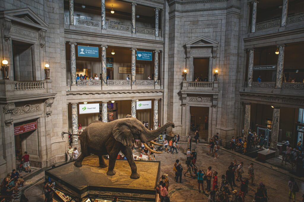 The famous Rotunda inside the Smithsonian National Museum of Natural History