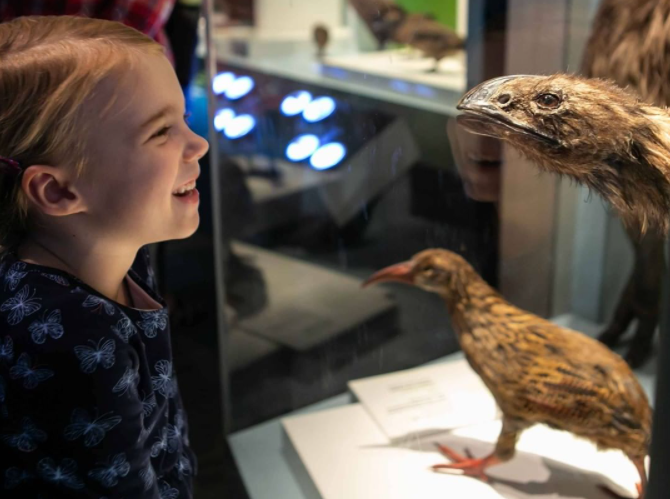 A flightless birds exhibit inside Te Papa