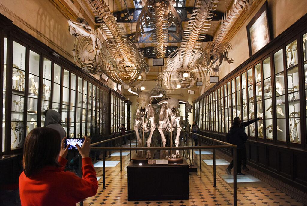 The comparative osteology hall inside Museo de la Plata