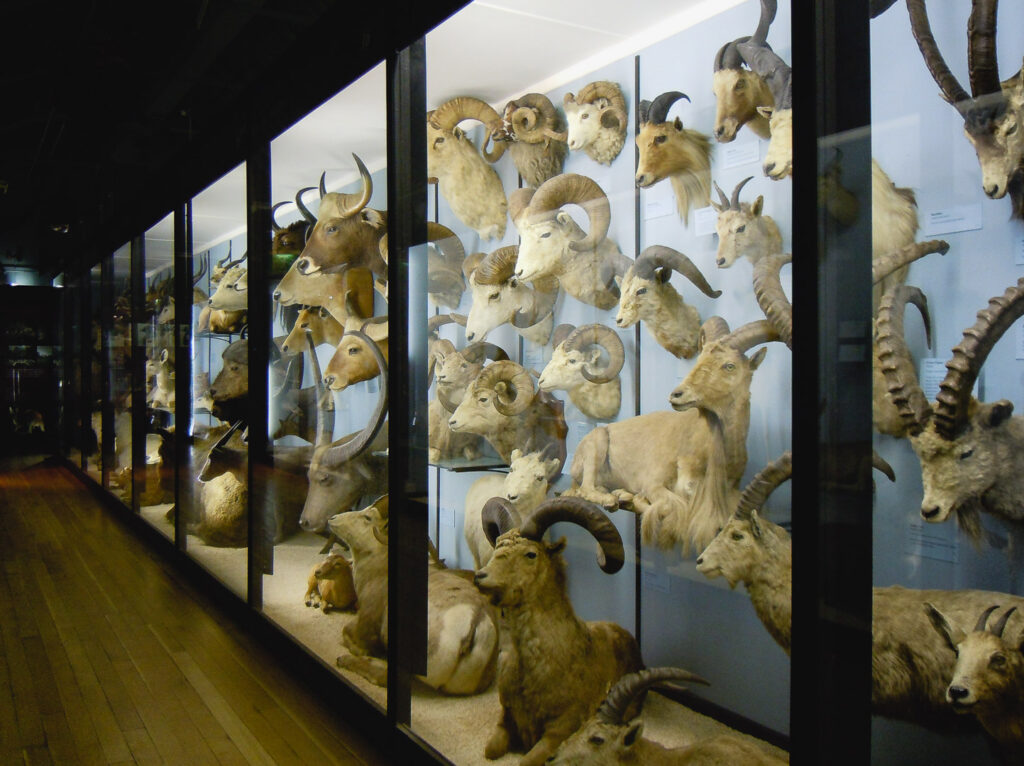 A cabinet full of taxidermy at Tring Natural History Museum
