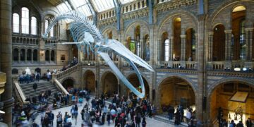 Hope the blue whale at the natural history museum London