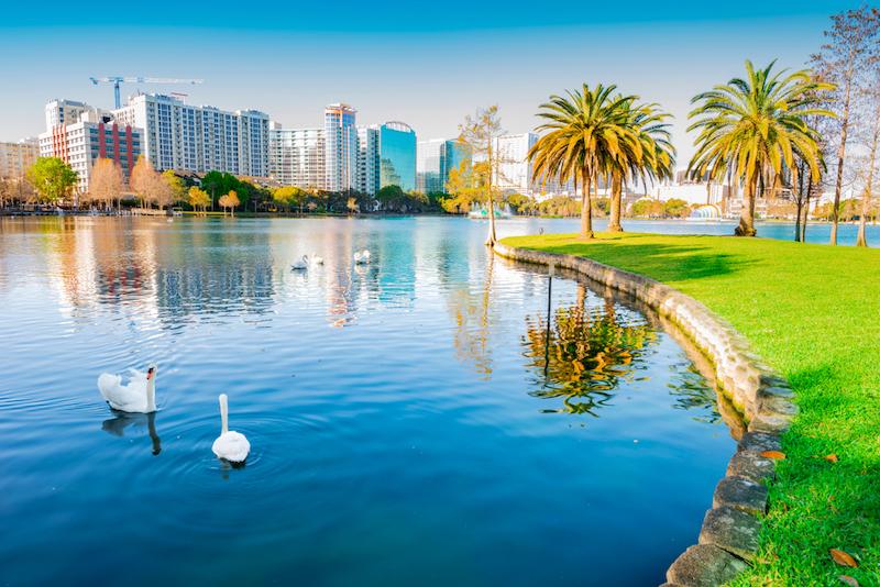Swans on Lake Eola Park in Orlando
