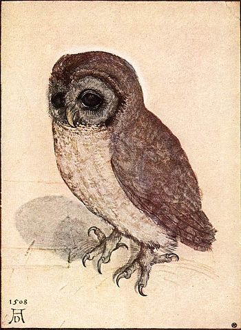 Little Owl by Albrecht Dürer, a famous painting of a bird. The owl looks small and cute, and is recreated in realistic detail.