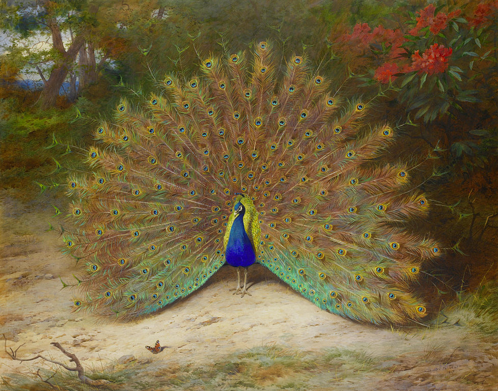 A painting of a majestic peacock by Archibald Thorburn, also featuring a small peacock butterfly.