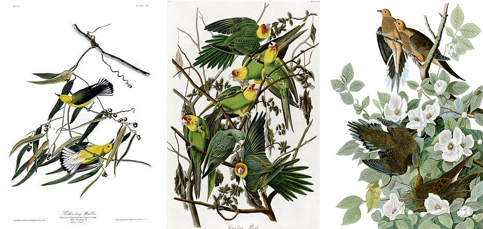 Three of John James Audubon's famous bird paintings in a collage.