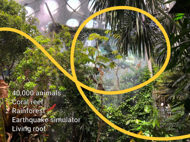 Photo of California Academy of Sciences rainforest with highlights of the museum laid over in text