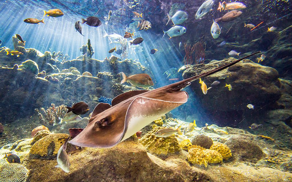 The view inside the main tank at Florida Aquarium