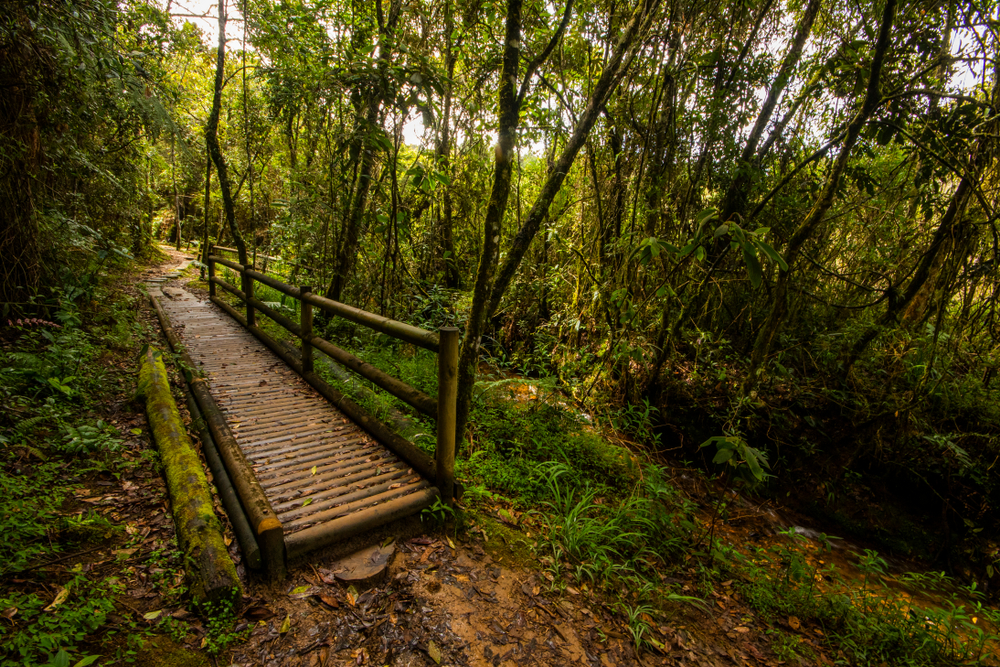 One of Parque Arví's many trails, featuring a wooden bridge in the middle of a forest.