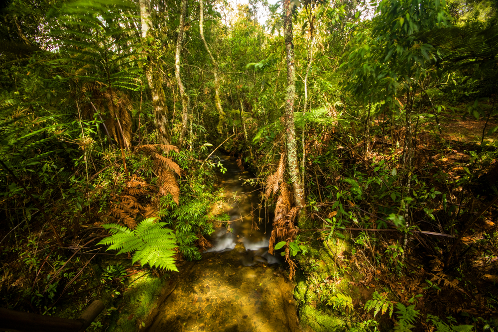 A photo of lush green vegetation at Parque Arví, with a stream running through the middle.